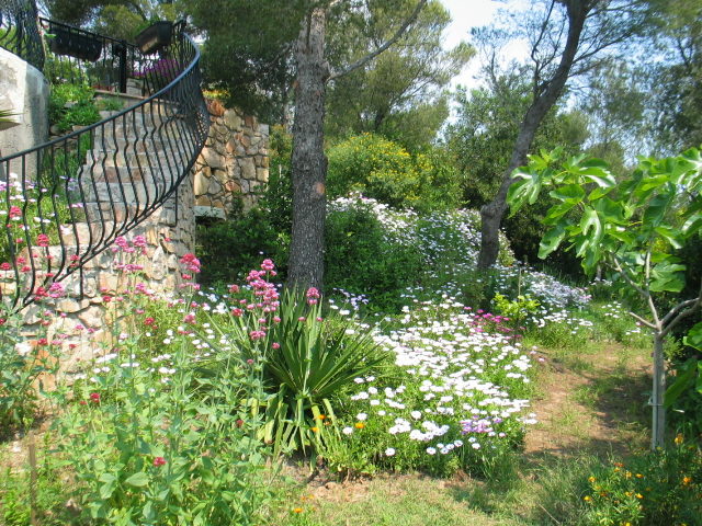 The garden, near the stairs to go to the pool